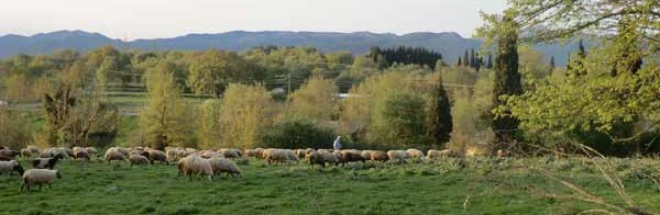 Shepherd in what was once Arcadian Megalopolis